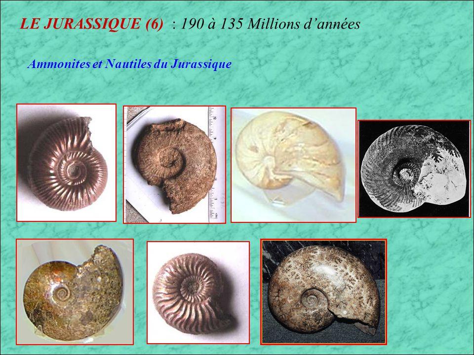 LE JURASSIQUE (6) : 190 à 135 Millions d'années