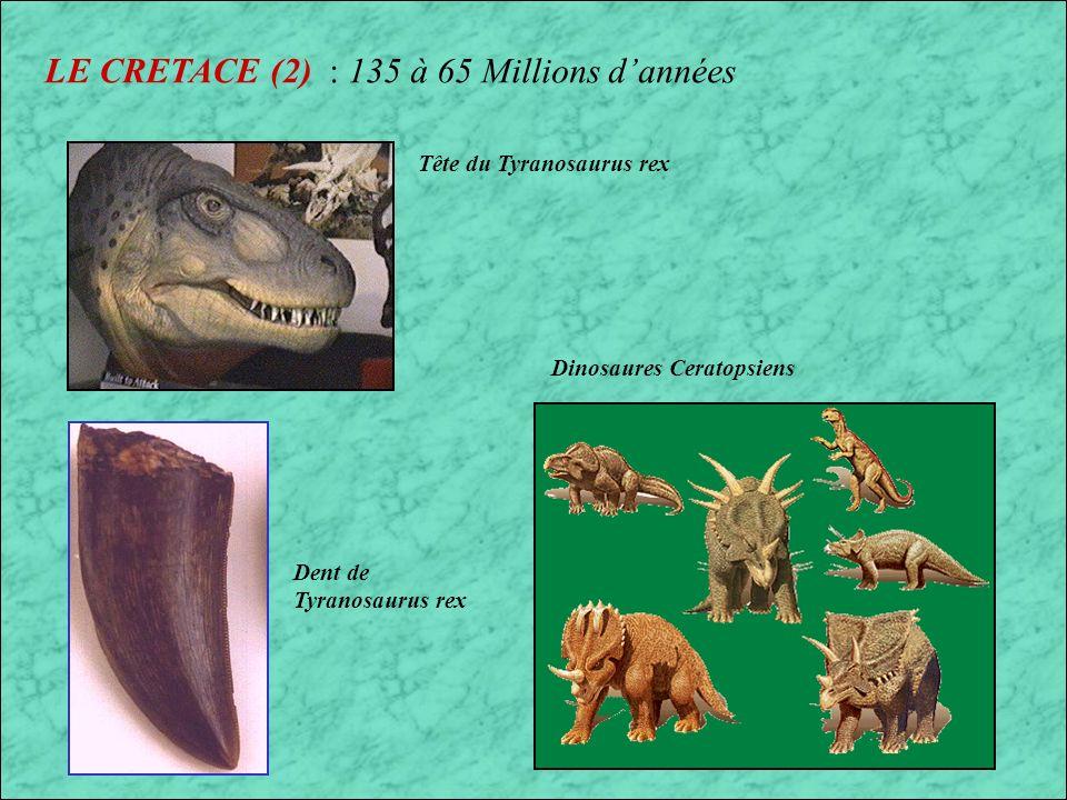 LE CRETACE (2) : 135 à 65 Millions d'années