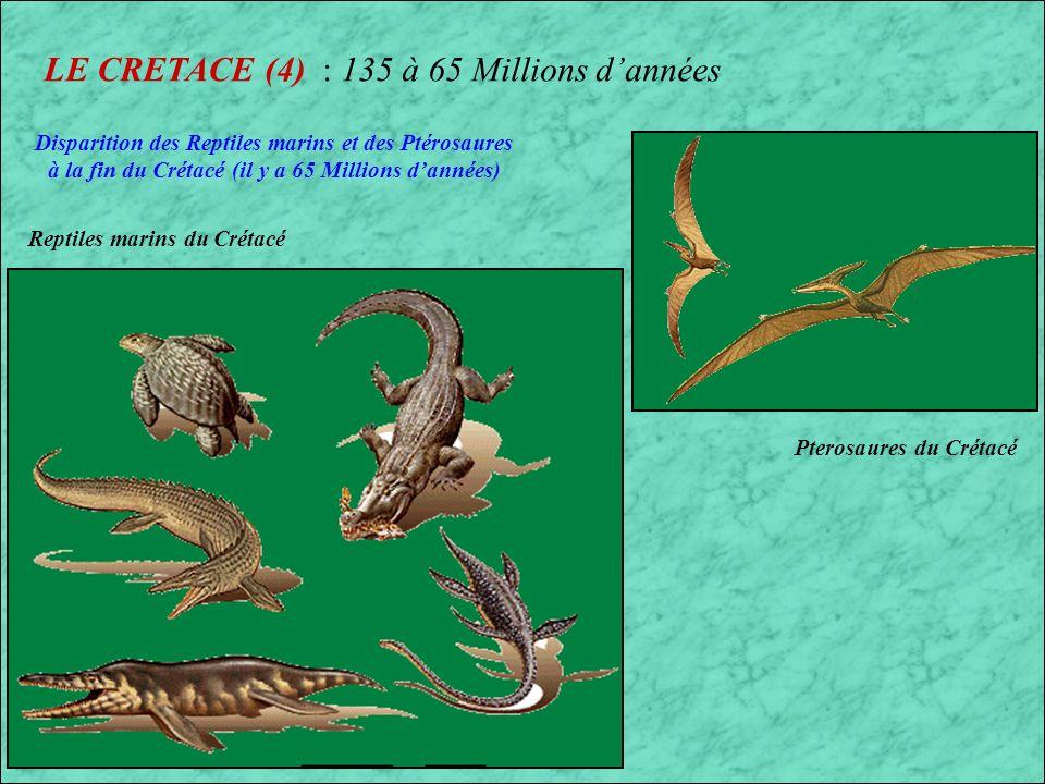 LE CRETACE (4) : 135 à 65 Millions d'années