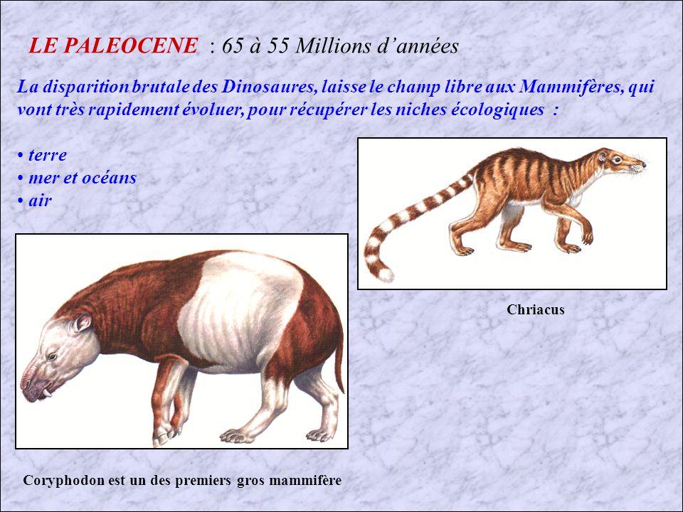 LE PALEOCENE : 65 à 55 Millions d'années