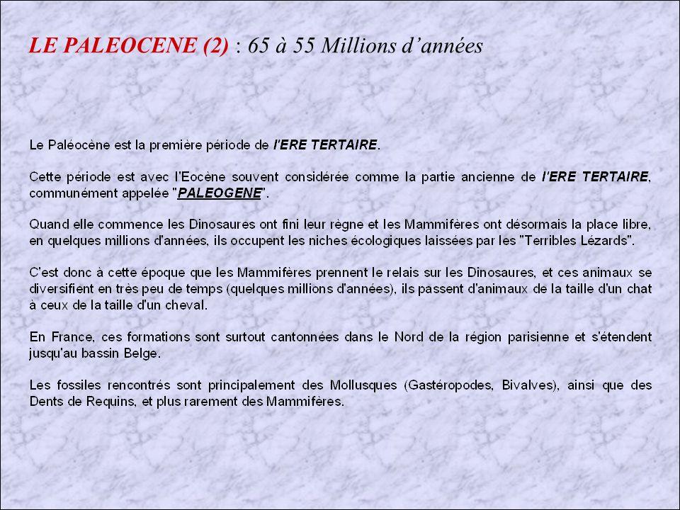 LE PALEOCENE (2) : 65 à 55 Millions d'années