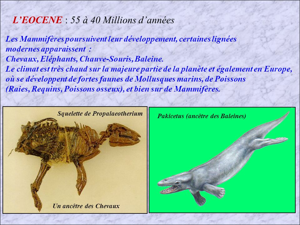 L'EOCENE : 55 à 40 Millions d'années