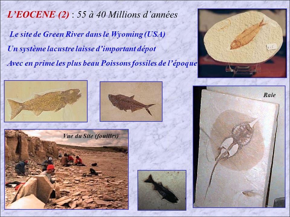 L'EOCENE (2) : 55 à 40 Millions d'années