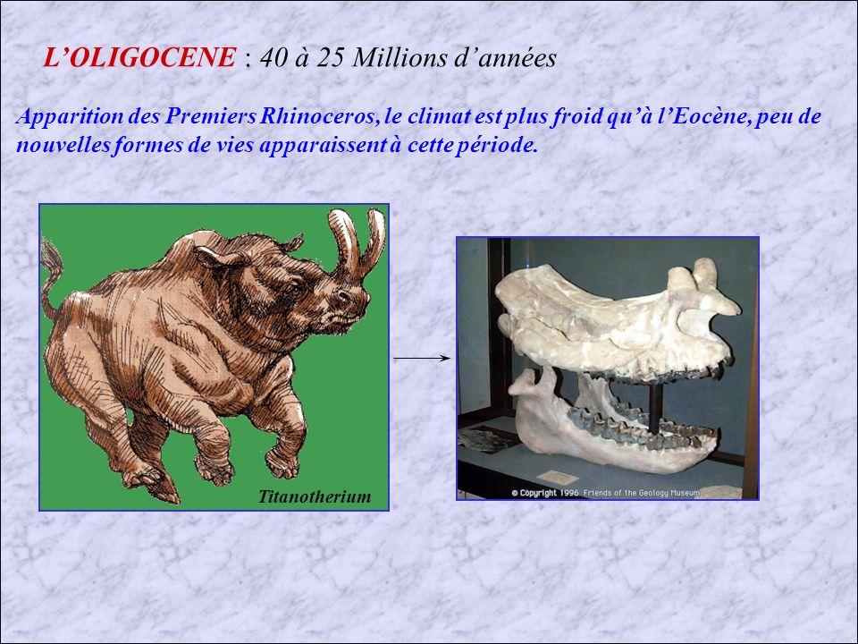 L'OLIGOCENE : 40 à 25 Millions d'années