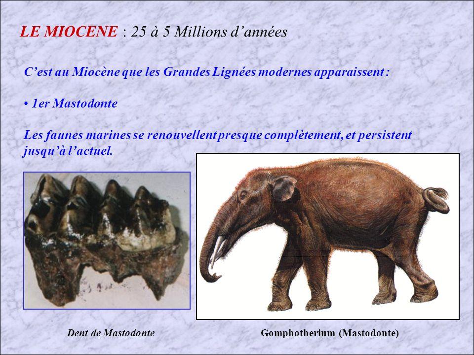 LE MIOCENE : 25 à 5 Millions d'années