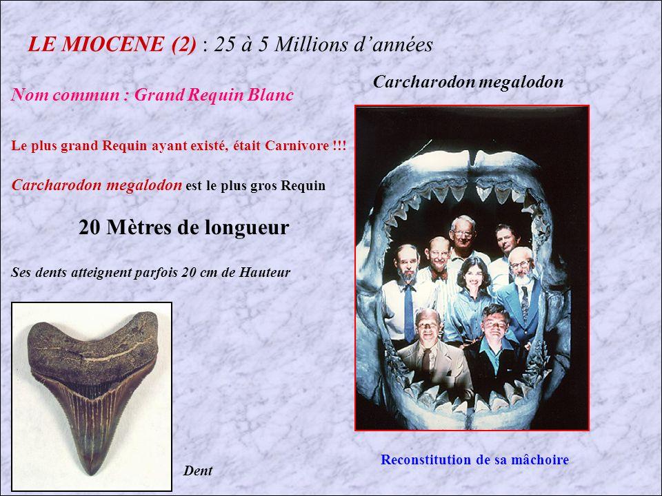 LE MIOCENE (2) : 25 à 5 Millions d'années