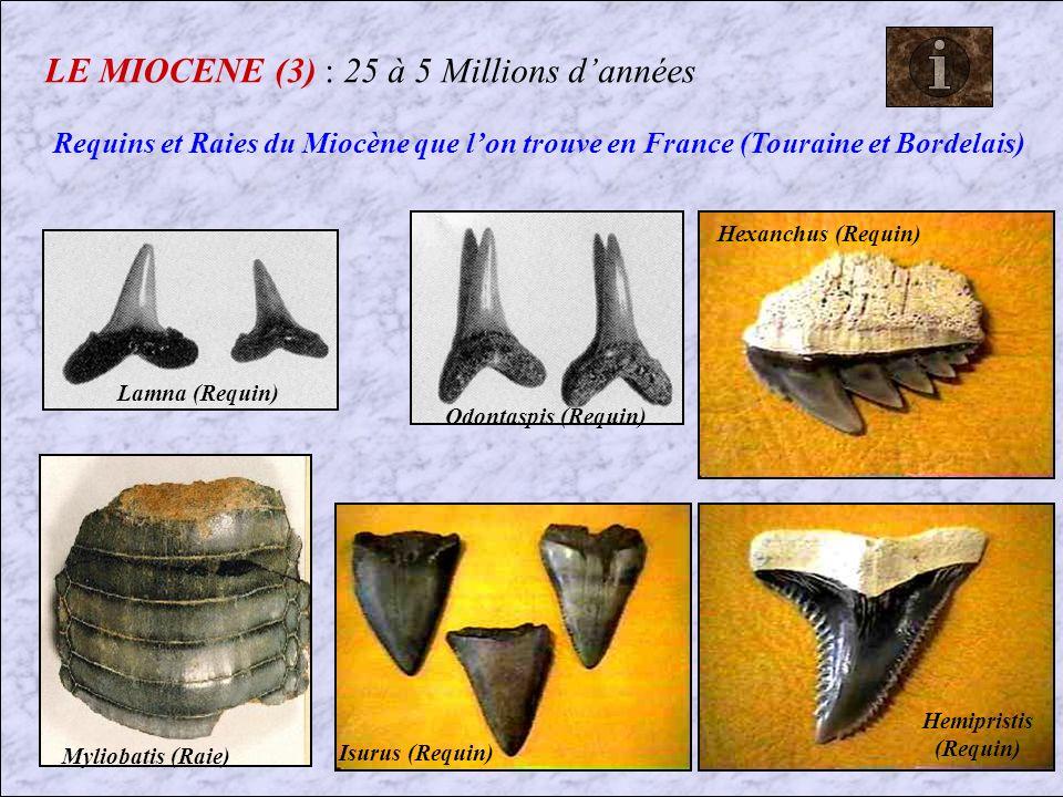 LE MIOCENE (3) : 25 à 5 Millions d'années