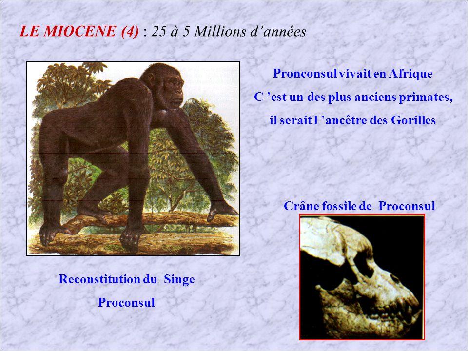 LE MIOCENE (4) : 25 à 5 Millions d'années