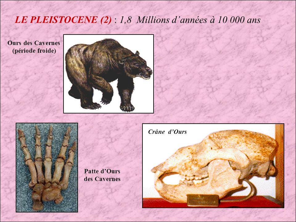 LE PLEISTOCENE (2) : 1,8 Millions d'années à 10 000 ans