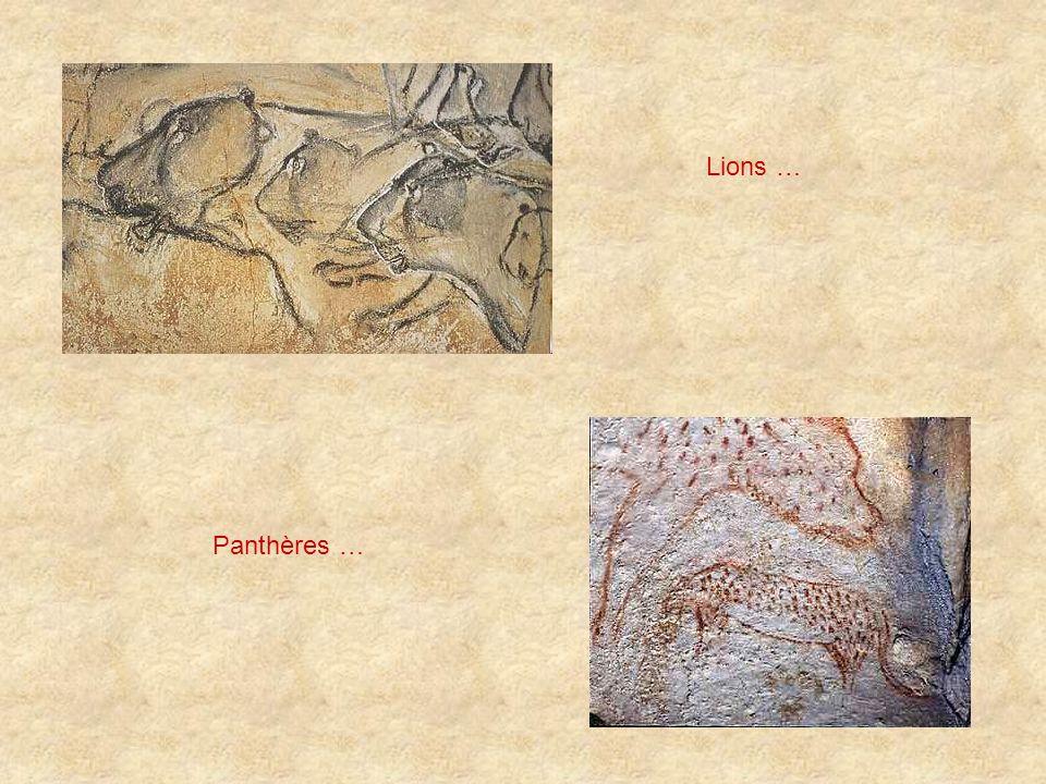 Lions … Panthères …