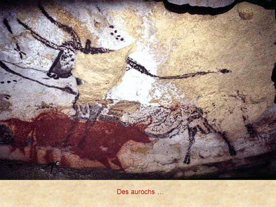 Des aurochs …