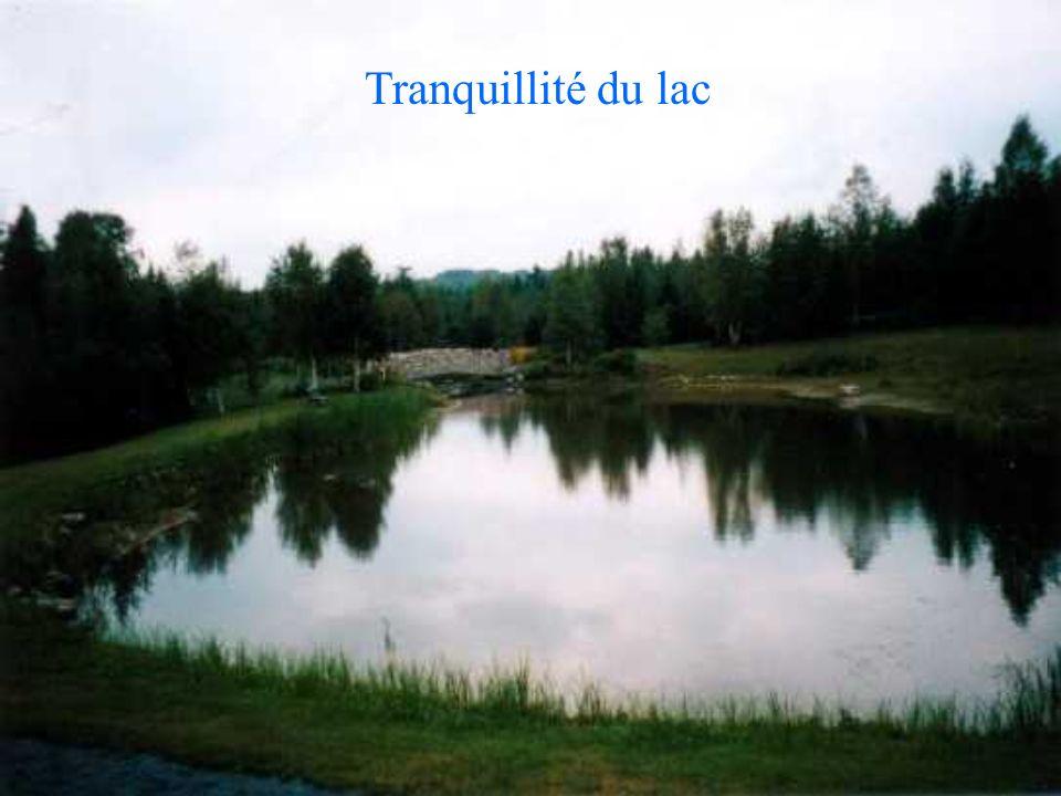Tranquillité du lac