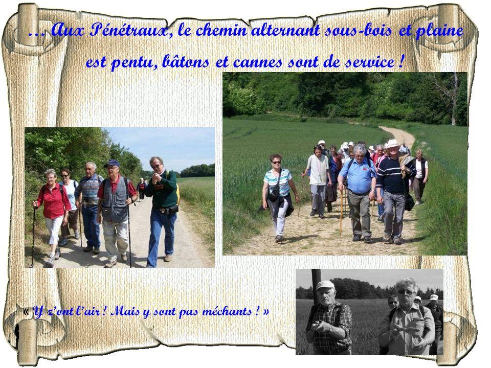 … Aux Pénétraux, le chemin alternant sous-bois et plaine est pentu, bâtons et cannes sont de service !