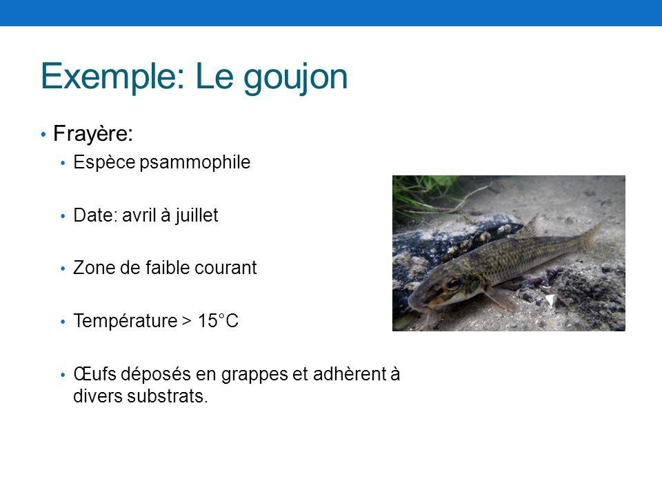 Exemple: Le goujon Frayère: Espèce psammophile Date: avril à juillet