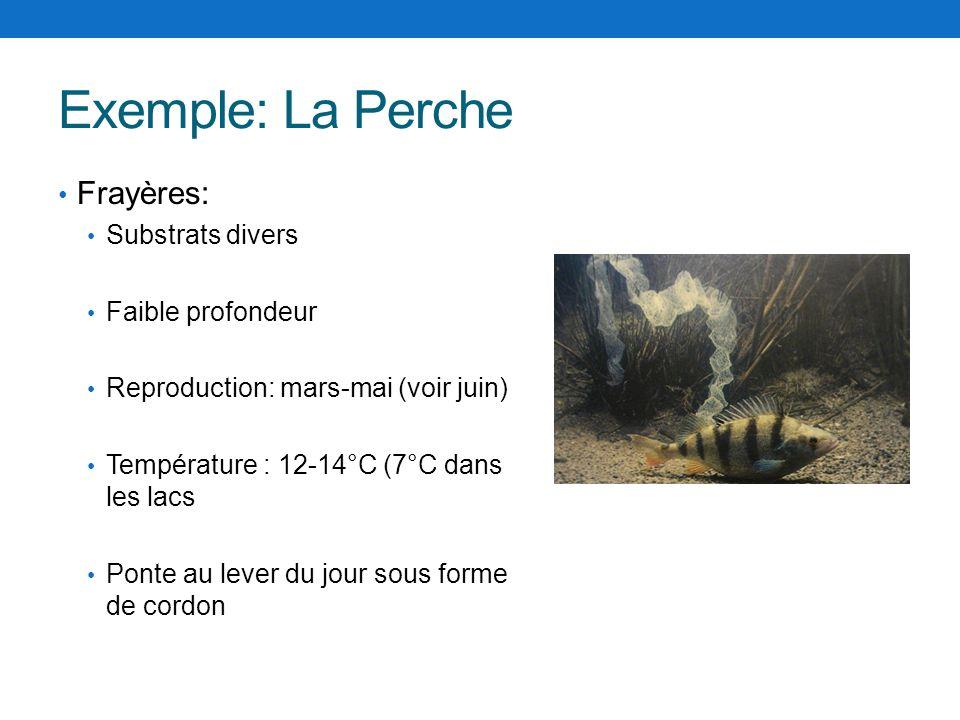 Exemple: La Perche Frayères: Substrats divers Faible profondeur