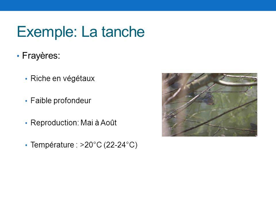 Exemple: La tanche Frayères: Riche en végétaux Faible profondeur