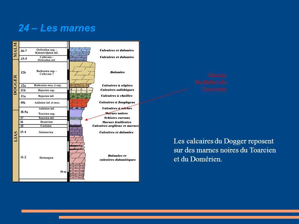 24 – Les marnes Marnes feuilletées du Domérien.