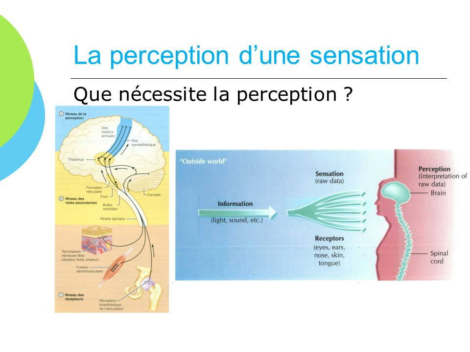 La perception d'une sensation
