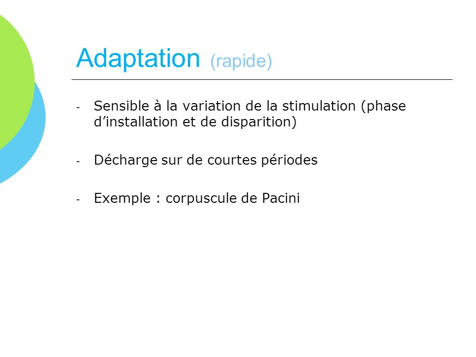 Adaptation (rapide) Sensible à la variation de la stimulation (phase d'installation et de disparition)