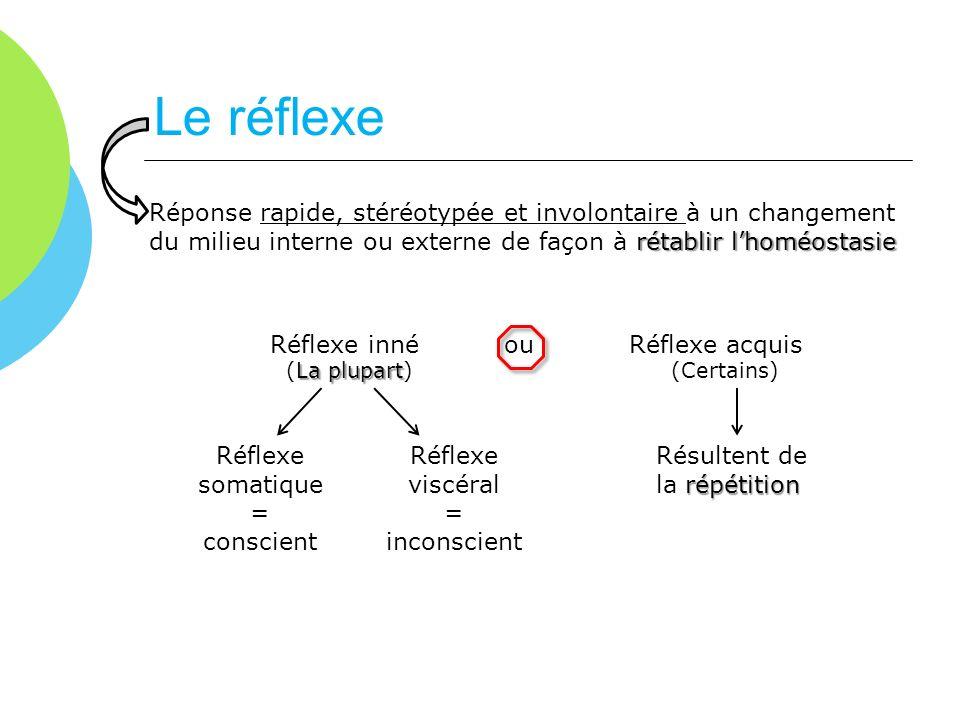 Le réflexe