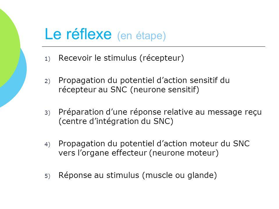 Le réflexe (en étape) Recevoir le stimulus (récepteur)