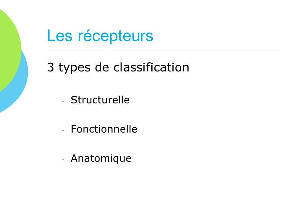 Les récepteurs 3 types de classification Structurelle Fonctionnelle