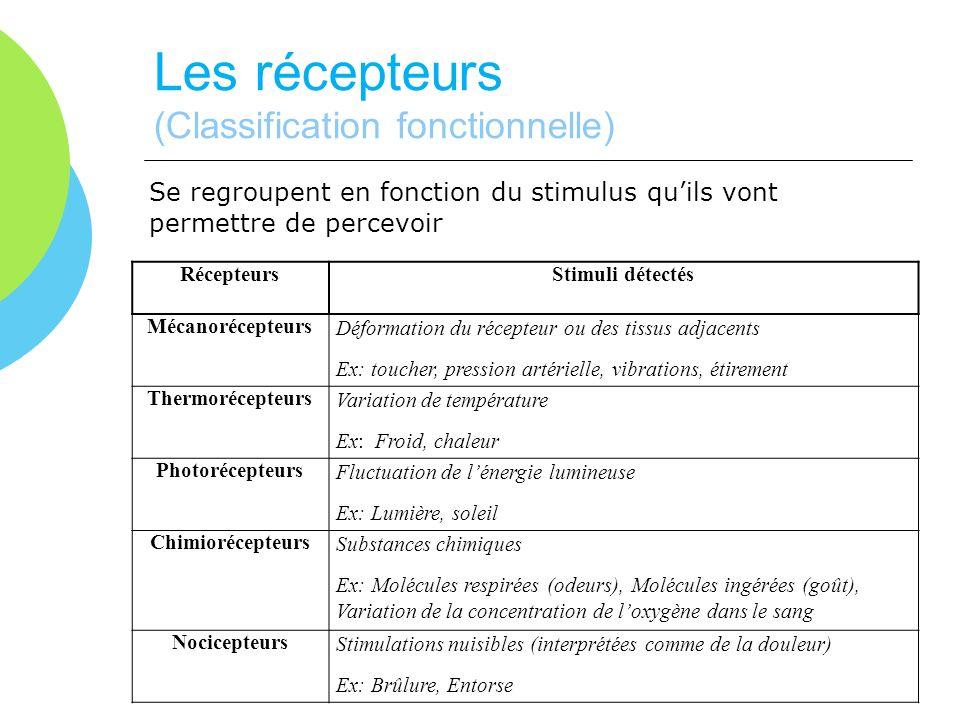 Les récepteurs (Classification fonctionnelle)
