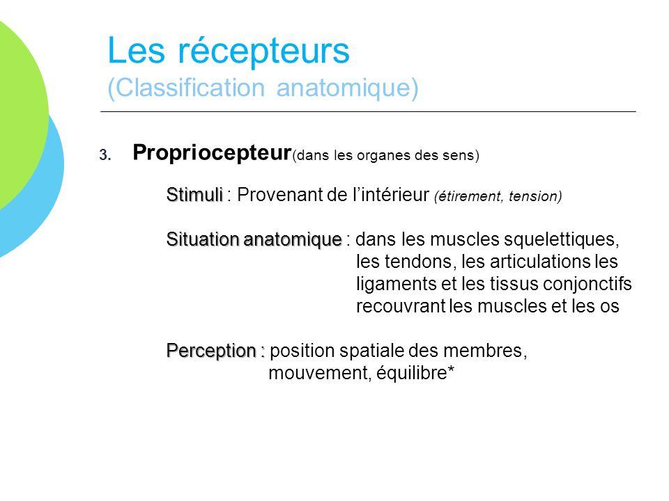 Les récepteurs (Classification anatomique)