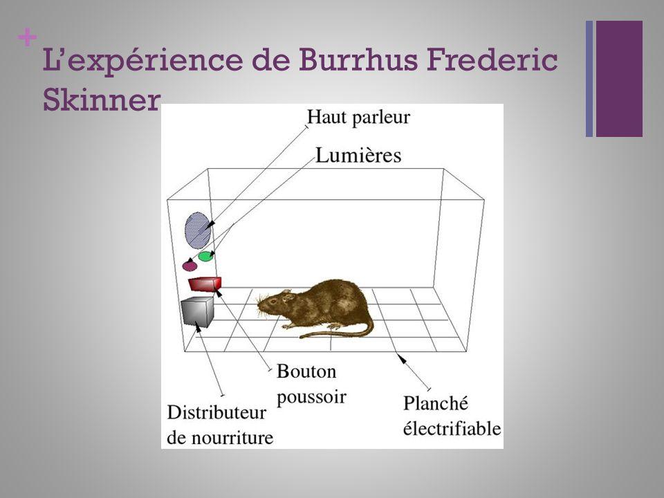 L'expérience de Burrhus Frederic Skinner