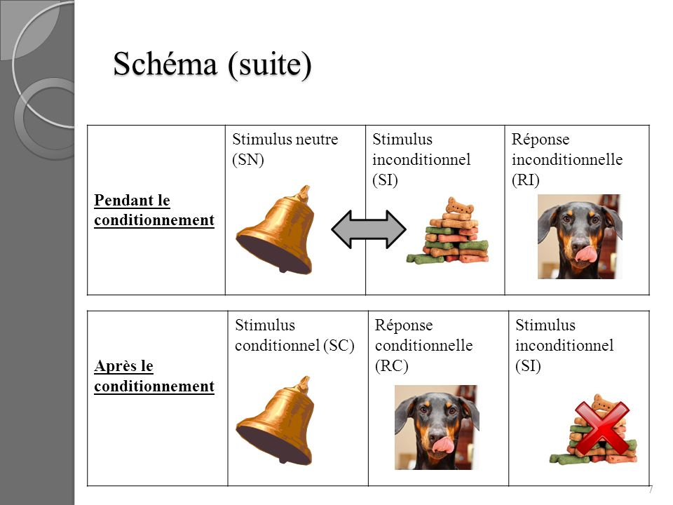 Schéma (suite) Pendant le conditionnement Stimulus neutre (SN)