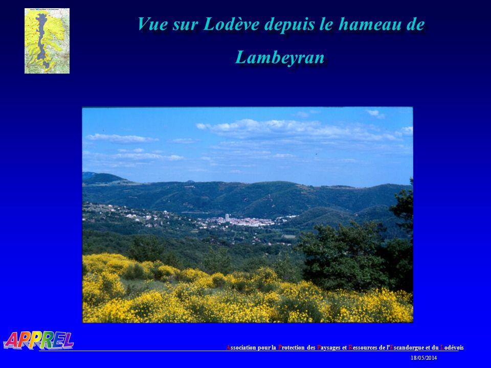 Vue sur Lodève depuis le hameau de Lambeyran