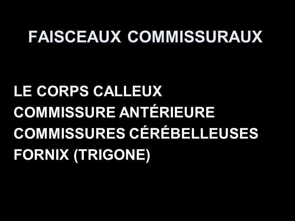 FAISCEAUX COMMISSURAUX