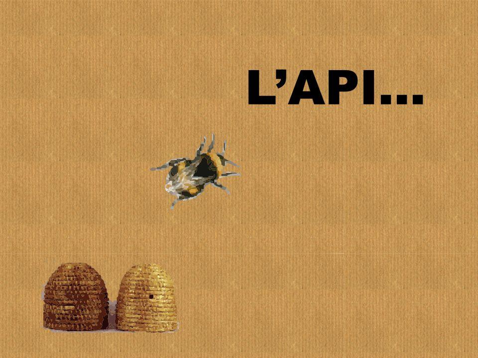 L'API…