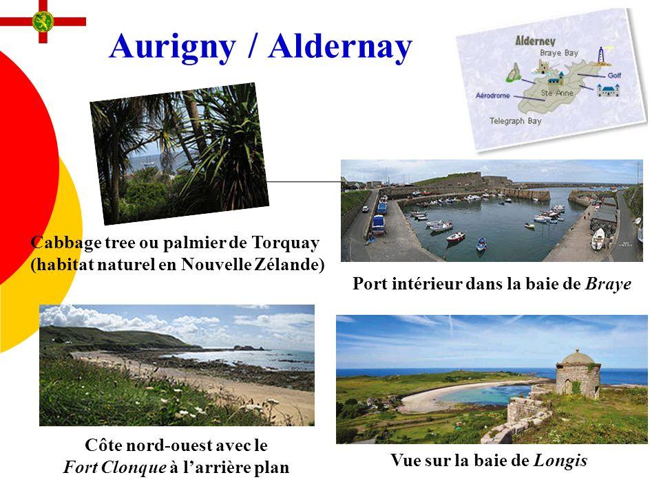 Aurigny / Aldernay Cabbage tree ou palmier de Torquay