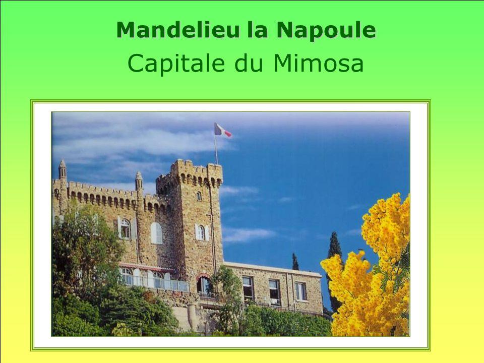 Mandelieu la Napoule Capitale du Mimosa
