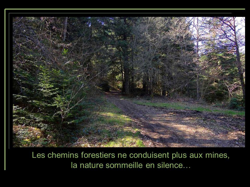 Les chemins forestiers ne conduisent plus aux mines, la nature sommeille en silence…