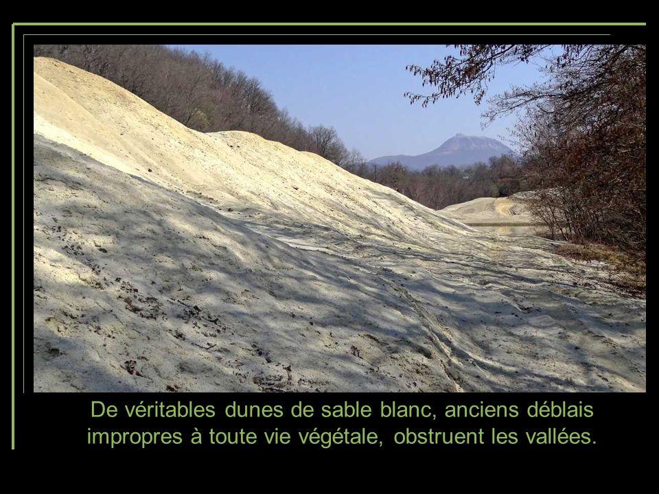 De véritables dunes de sable blanc, anciens déblais impropres à toute vie végétale, obstruent les vallées.