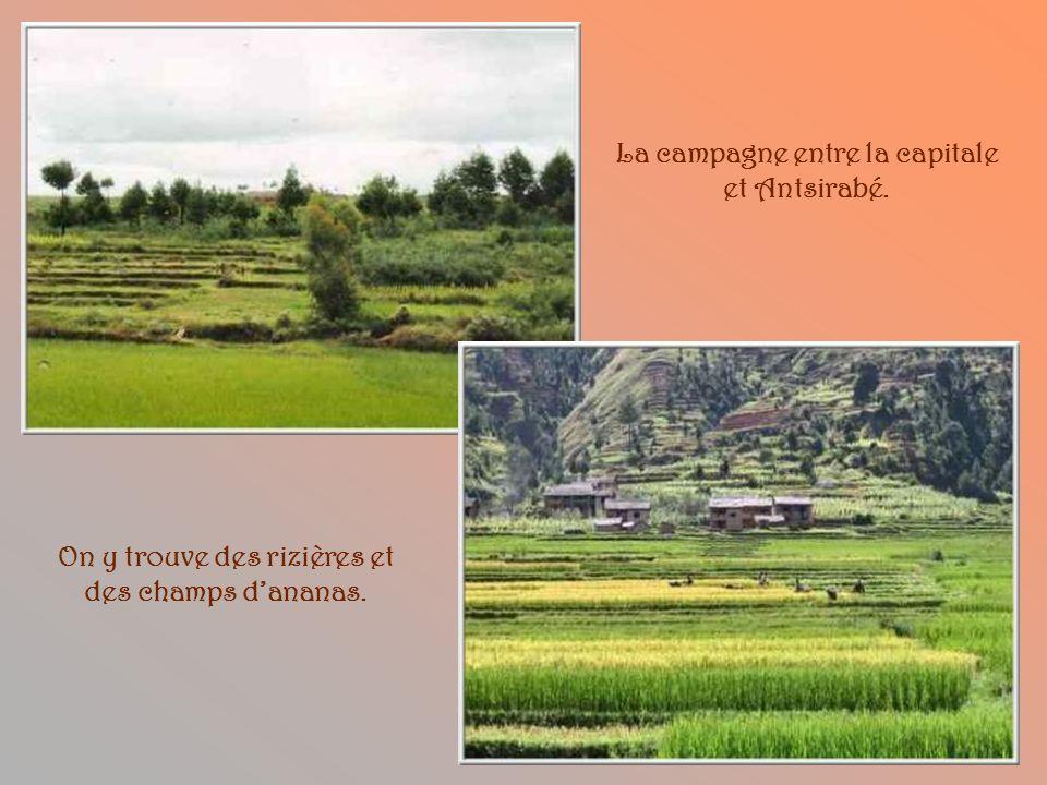 La campagne entre la capitale et Antsirabé.