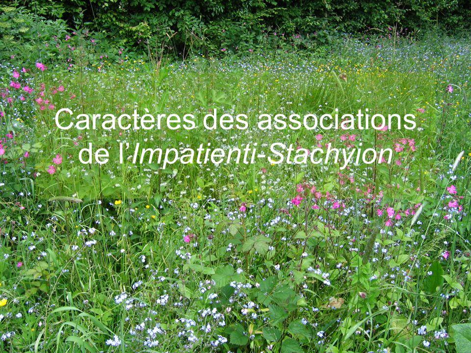 Caractères des associations de l'Impatienti-Stachyion
