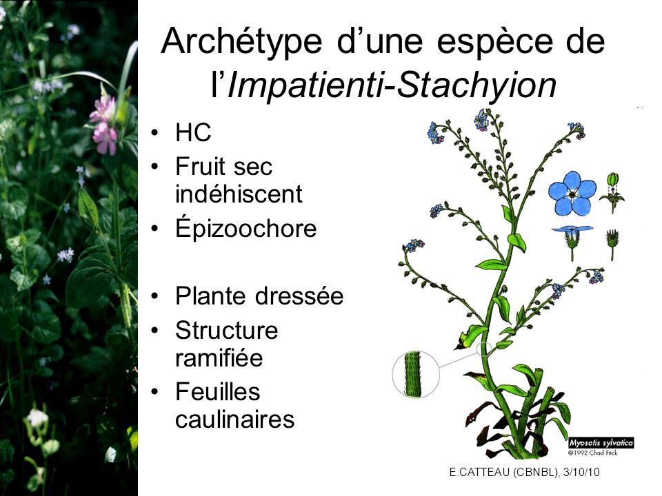 Archétype d'une espèce de l'Impatienti-Stachyion