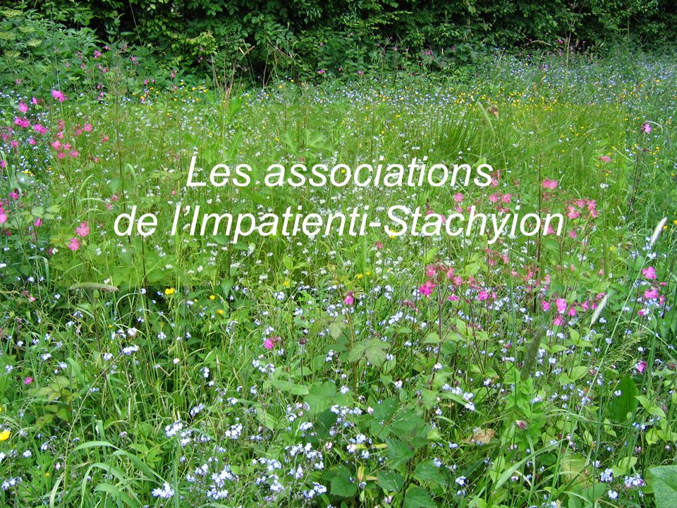 Les associations de l'Impatienti-Stachyion