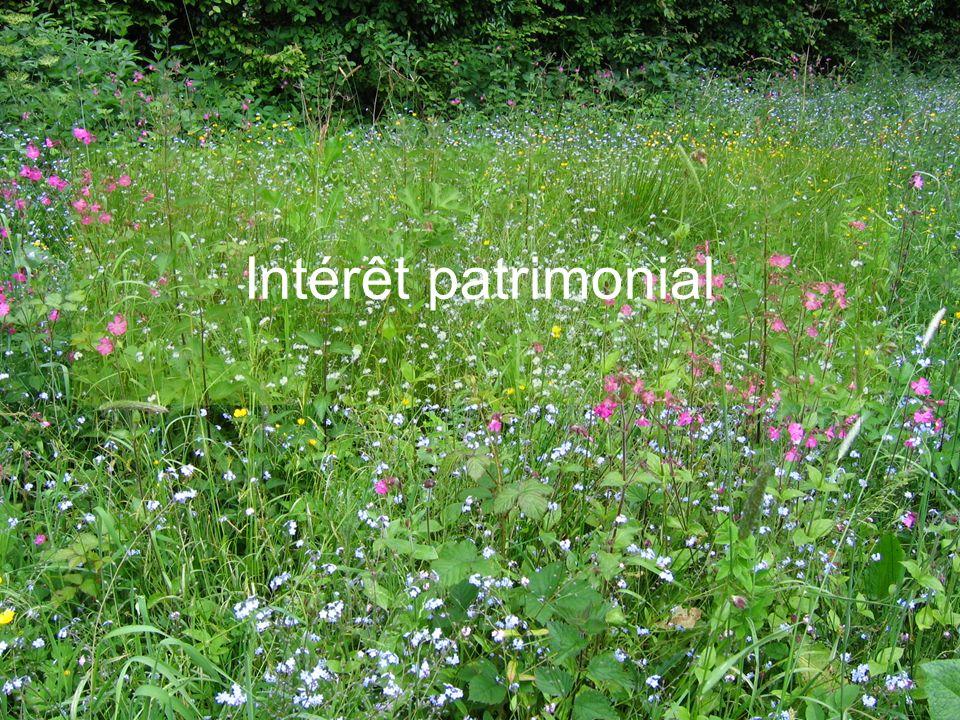 Intérêt patrimonial E.CATTEAU (CBNBL), 3/10/10