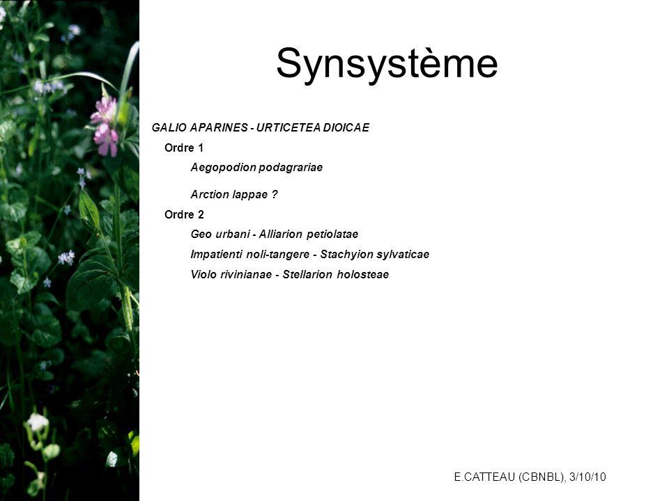 Synsystème GALIO APARINES - URTICETEA DIOICAE Aegopodion podagrariae