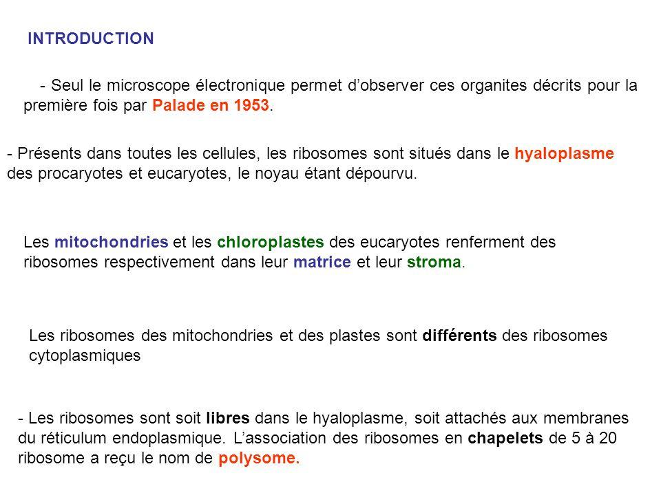 INTRODUCTION - Seul le microscope électronique permet d'observer ces organites décrits pour la première fois par Palade en 1953.