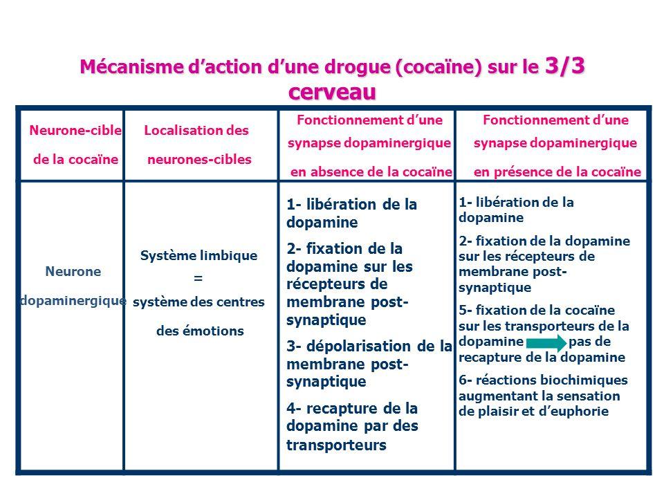 Mécanisme d'action d'une drogue (cocaïne) sur le 3/3 cerveau