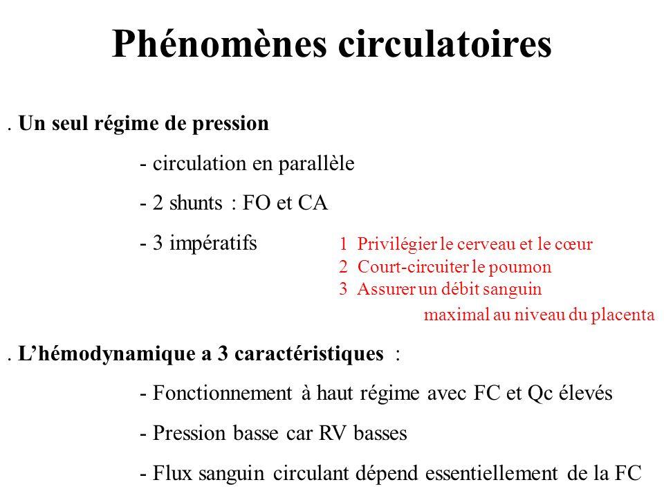 Phénomènes circulatoires