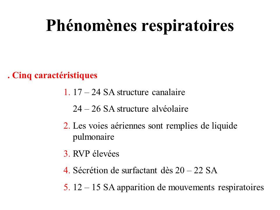 Phénomènes respiratoires