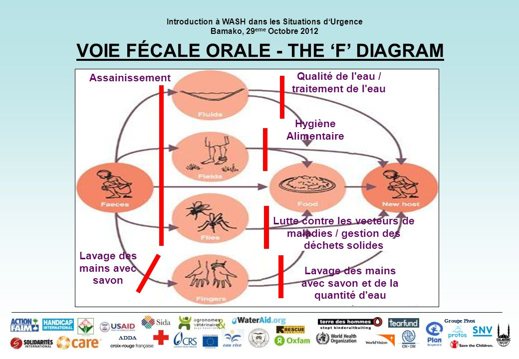 VOIE FÉCALE ORALE - THE 'F' DIAGRAM