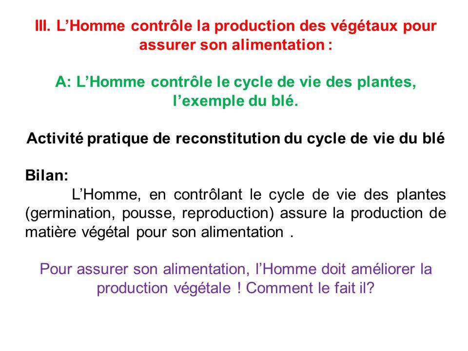 A: L'Homme contrôle le cycle de vie des plantes, l'exemple du blé.