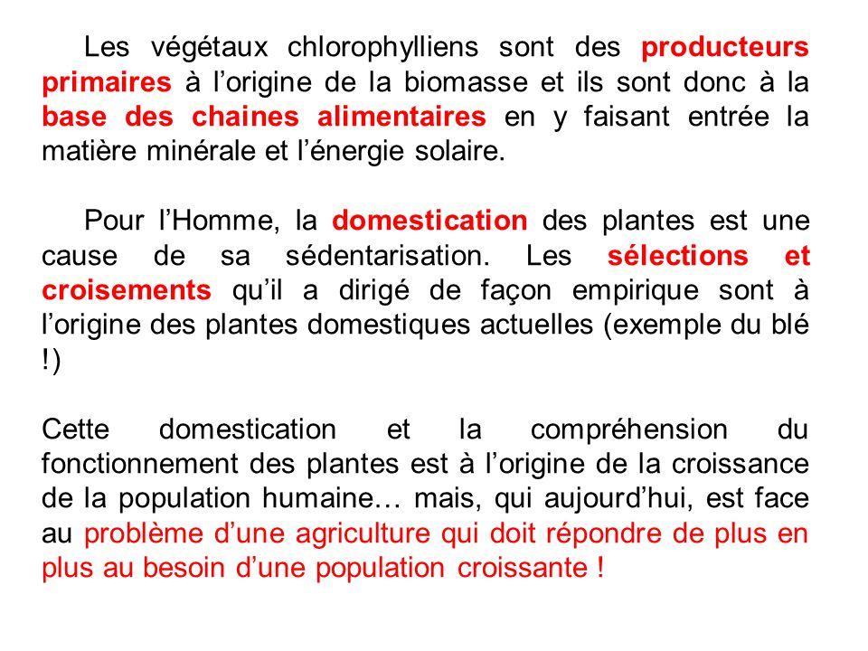 Les végétaux chlorophylliens sont des producteurs primaires à l'origine de la biomasse et ils sont donc à la base des chaines alimentaires en y faisant entrée la matière minérale et l'énergie solaire.